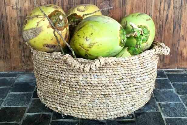 Coconut Bond