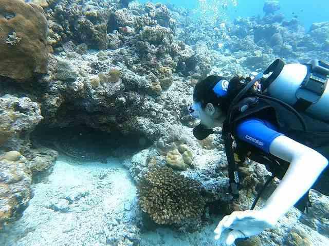 rakul preethi sing scuba diving in goa