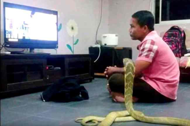 snake marriage with yang boy